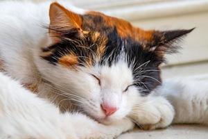 chat endormi sur le sol dans la nature photo