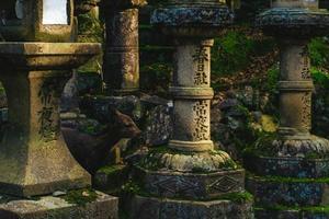 un cerf entre toros, lanternes en pierre japonaises, à kasuga taisha, nara photo