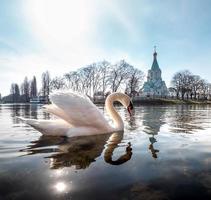 un élégant cygne blanc sur l'eau de la rivière photo