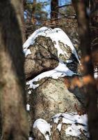 forêt d'hiver dans les montagnes vosgiennes, france photo
