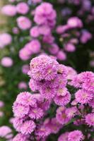 beau fond de fleur de benjamas photo