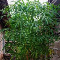 photo de plantes vertes qui poussent en abondance