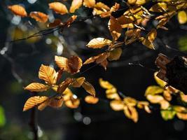 temps ensoleillé dans la forêt photo