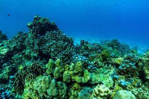 scène sous-marine avec récif de corail, île de raya, phuket, thaïlande. photo