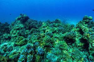 scène sous-marine avec récif de corail et poisson. photo