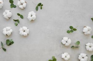 voir le cadre de fleurs de coton. beau concept de photo de haute qualité