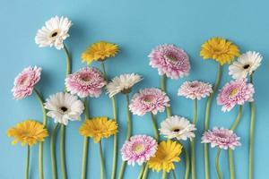 vue de dessus des fleurs en fleurs. beau concept de photo de haute qualité