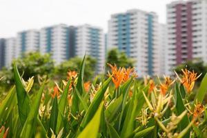 beauté de la nature et des fleurs photo
