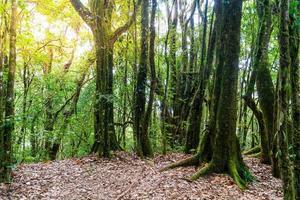 arbres forestiers. nature bois vert lumière du soleil et ciel photo