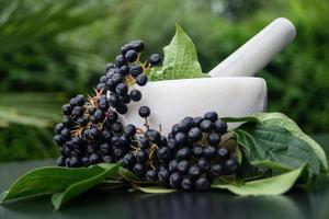 Aronia aronia sorbier des oiseleurs noir photo