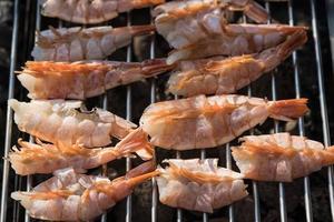gambas rouges d'argentine grillées photo