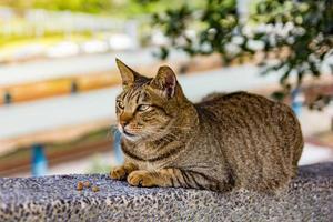 portrait d'un beau chat en journée ensoleillée photo