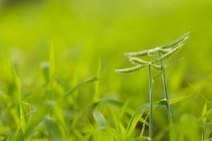 fleur d'herbe verte photo