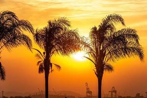 silhouettes de cocotiers dans la zone portuaire de rio de janeiro. photo