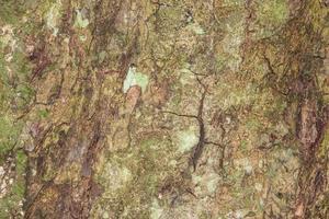 texture d'écorce d'arbre pour le fond photo