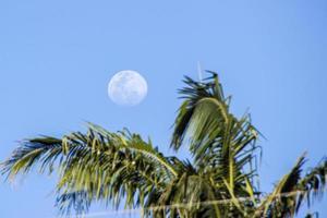 pleine lune dans un beau ciel bleu photo