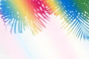 Ombre de feuille de palmier tropical coloré sur fond de mur de papier photo