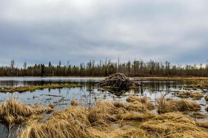 sombre au-dessus de la fonte jour de printemps aux étangs de castors. Parc national d'Elk Island, Alberta, Canada photo