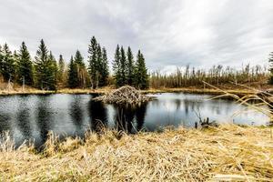 au cours de la journée d'automne au lac astoria. Parc national d'Elk Island, Alberta, Canada photo