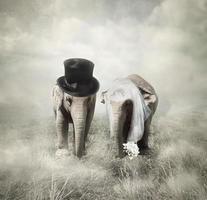 le mariage des éléphants photo