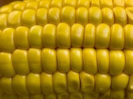 grains de maïs en gros plan photo