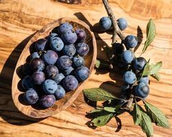 fruits du prunellier photo