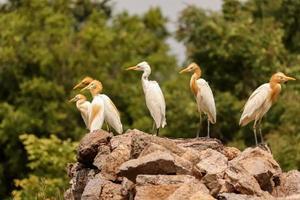 oiseaux assis sur les rochers , groupe d'oiseaux photo