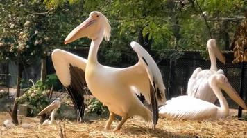 photos d'oiseaux au zoo, ailes d'oiseaux ouvertes
