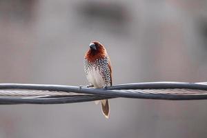 petit oiseau assis sur un fil photo