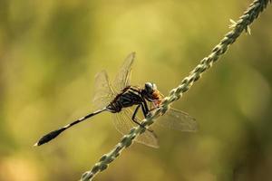 libellule sur feuille, fond nature photo