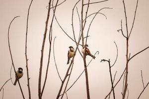 oiseau assis sur la branche d'arbre, paire d'oiseaux, fond nature photo