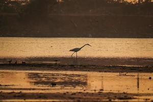 oiseau marchant dans l'eau , oiseaux volant , coucher de soleil sur le lac photo