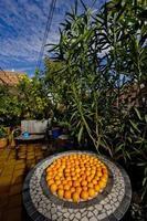 oranges sur la table de jardin de la terrasse photo