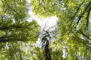 la belle forêt verte naturelle photo