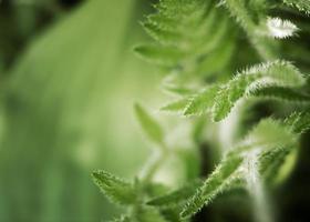 fermer les feuilles vertes nature photo