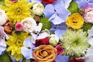 fleurs roses colorées joliment fleuries à plat photo