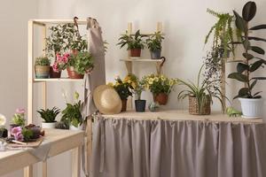 la maison de jardinage avec des plantes photo