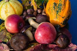 décoration d'automne annuelle photo