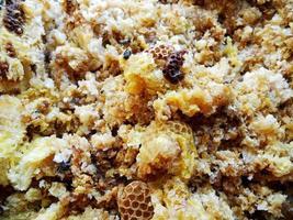 nid d'abeille en cire d'une ruche remplie de miel doré photo
