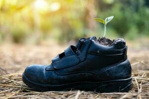 germination des graines de citrouille dans les chaussures de démarrage photo