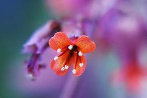 fleurs étonnantes dans les jardins botaniques d'israël photo