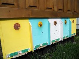 texture hexagonale de fond, nid d'abeille de cire d'une ruche remplie d'abeilles photo