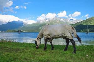 un cheval couvert et avec le mur sur le mur comme protection contre les insectes photo