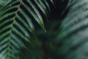 feuilles de fougère sombre pendant la saison des pluies tropicales photo