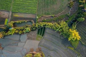 jeune plant de riz dans le champ ci-dessus photo