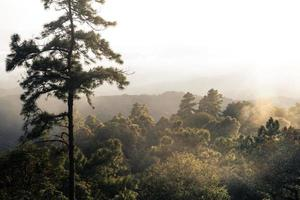 arbres et fougères dans la forêt pluvieuse photo