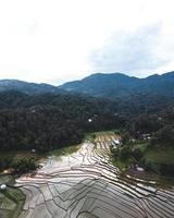 rizières en début de culture photo