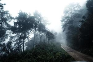 route dans une forêt tropicale, la route dans la forêt tropicale humide photo