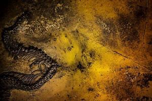 fossile de squelette de dinosaure préhistorique photo