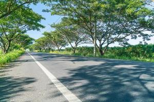 route asphaltée en forêt - améliorez le style de traitement des couleurs avec l'effet sunflare photo